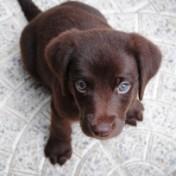 Trikots auch für Hunde