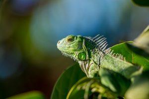 Geckogrün ist das neue Ausweichtrikot.